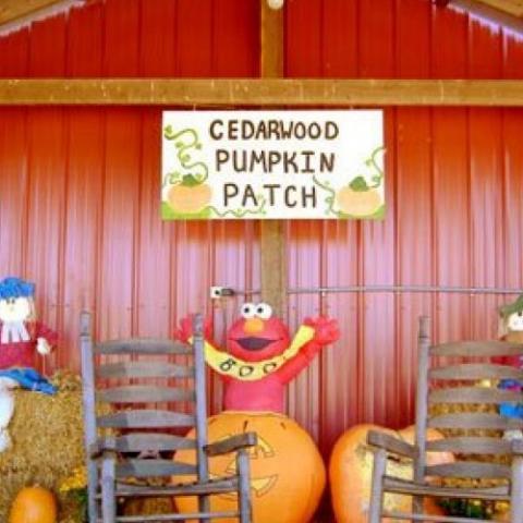 Cedarwood Nursery & Pumpkin Patch