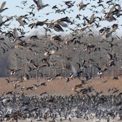 Chickasaw National Wildlife Refuge