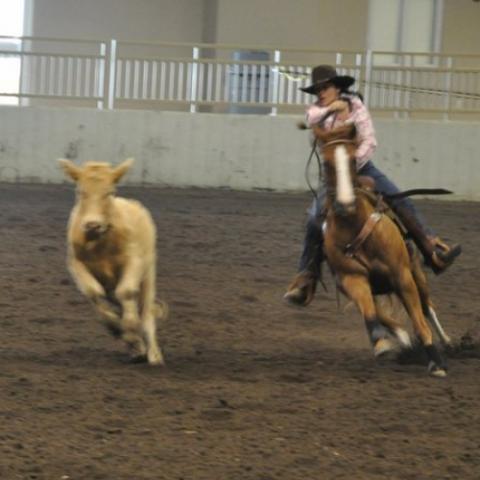 Clearview Horse Farm B&B