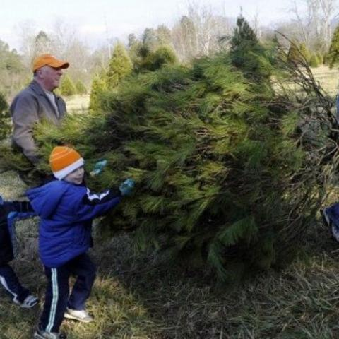 Locust Point Christmas Tree Farm