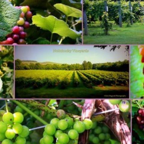Nolichucky Vineyard and Grape Barn