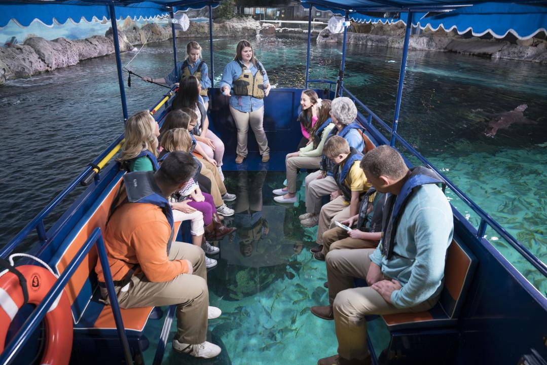 Glass Bottom Boat Tours ReefFree