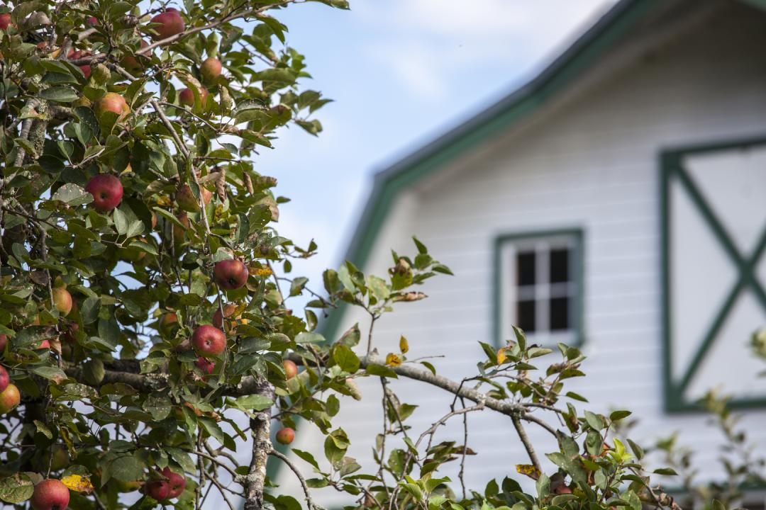 Spend time at the Apple Barn & Cider Mill for freshly baked apple delights, candies, wine and more.