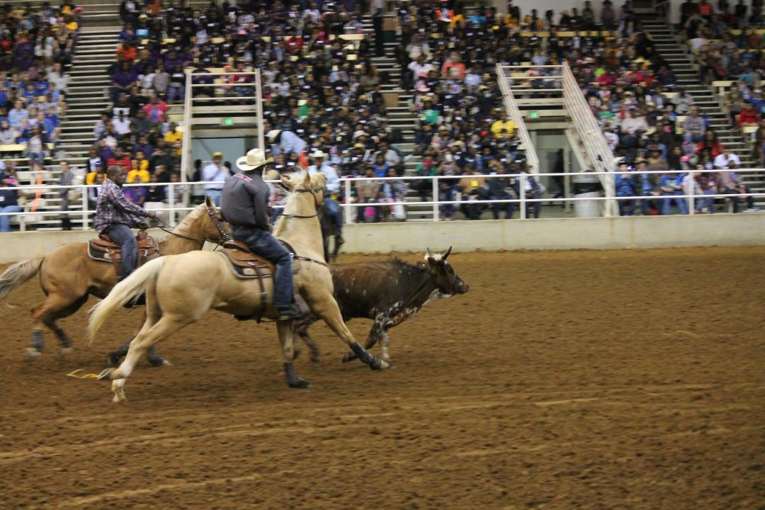 Rodeo at ShowPlace Arena
