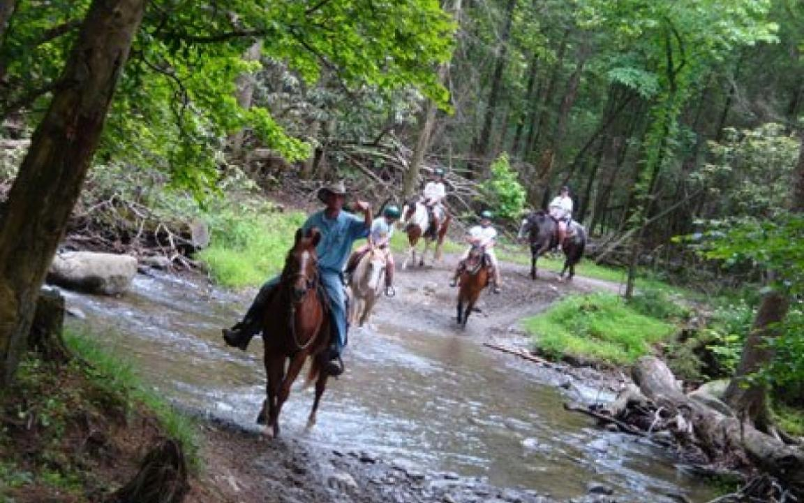 Your guided horseback or carriage ride will cross Abrams Creek going to or returning from out  mountain trails