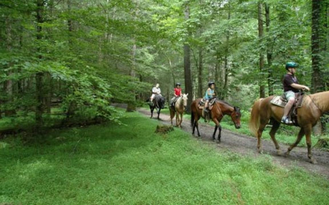 Family taking a guided horseback ride through a forested trail in Cades Cove