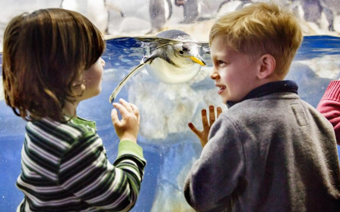 Kids enjoy penguins at the Tennessee Aquarium