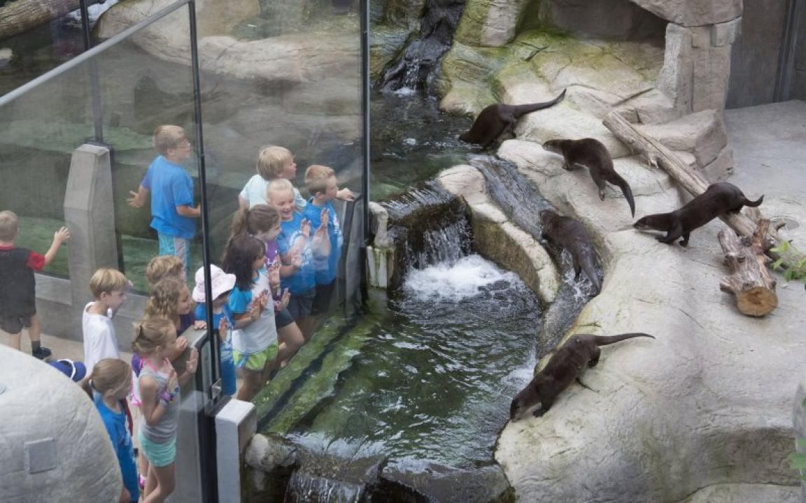 Tennessee Aquarium In Chattanooga Tn Tennessee Vacation